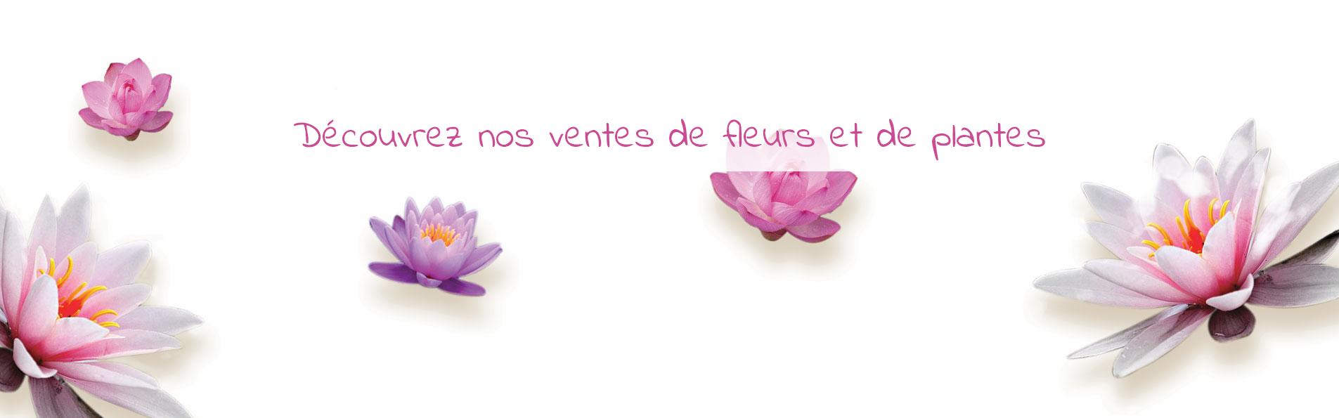sandrine-fleurs-vente-ephemere-slide-banniere