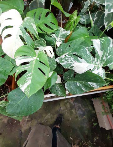 Plantes vertes d'intérieur
